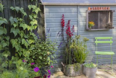 how to create a bog garden perrywood - Bog Garden