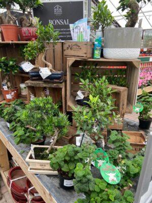 Bonsai Tree Display