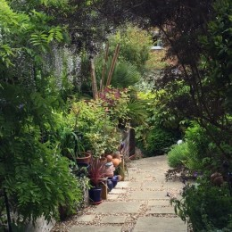 This is a photo looking down one of the paths in my sloping garden. The slope is a marvellous asset as it gives very varied perspectives on the individual plants as well as the overall effect. Annette Hutchison