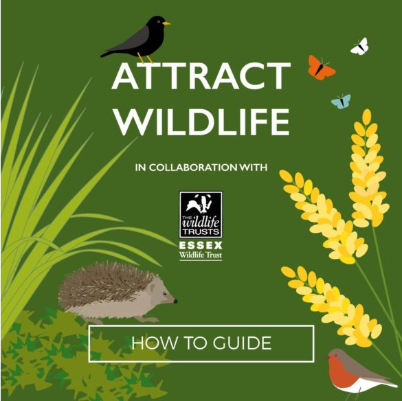 Attract_Wildlife_How_to