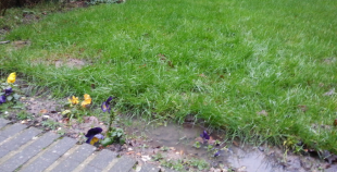 Avoiding waterlogged lawns