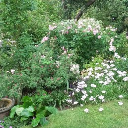 This bed contains a mixture of David Austin Roses, Fuchsias, Salvias and anything else we could squeeze in. Thank you Perrywood for helping us to create a garden that gives us so much pleasure.<br /> Brenda Jones
