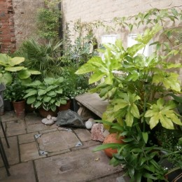 A very small, walled courtyard garden with an exotic touch! Carol Dossett