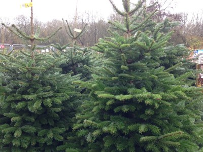 Christmas trees sold at Perrywood