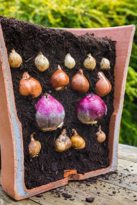 Plant A Bulb Lasagne For A Bold Display In Spring