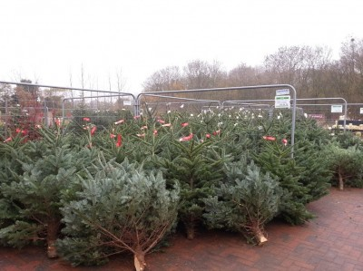 Cut Christmas trees sold at Perrywood