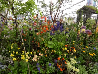A beautiful perennial border at Chelsea 2015 featuring Geums