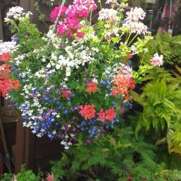 Picture of my basket - not as ginormous as the hotels but I am proud of them. Plants from your garden centre. Denise Banks