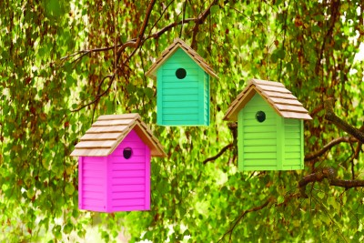 Give bird boxes a splash of colour!
