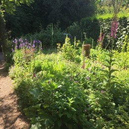 Our cottage garden, we have planted lots of Perrywood bee and other insect friendly plants :) Gem Morgan