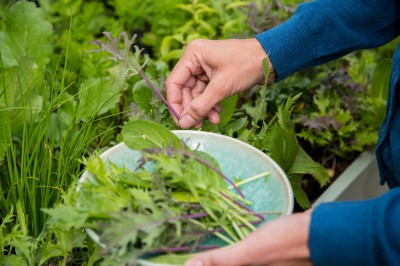 Grow Your Own salad crops - salad leaves seed