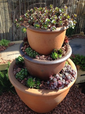 Growing alpines in containers