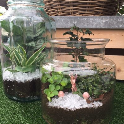 Terrariums made by Perrywood