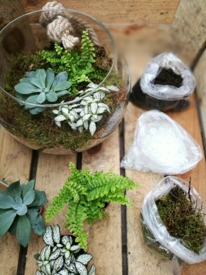 Win A Terrarium Kit For Your Home Perrywood
