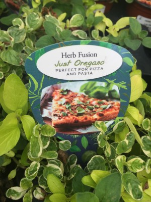 Pungent Oregano perfect for your pizza