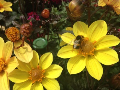 Plants to attract bees and pollinators
