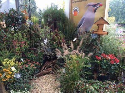 How To Create A Bird Friendly Garden Perrywood