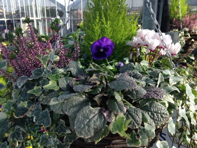 Autumn winter hanging baskets