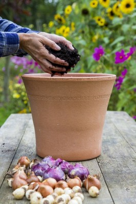 Layer up bulbs with compost