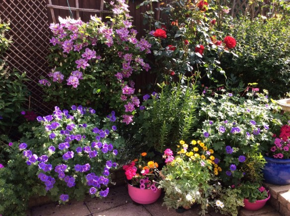 Your Gardens Perrywood