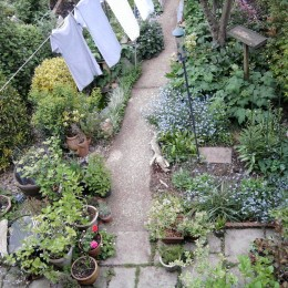 This is a view of my back garden taken during May 2015 from an upstairs window. I hope you like it, please excuse the washing but then, it's all part of the joys of a back garden! Mary Holditch