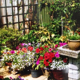 With the use of Perrywood plants, Mrs Good worked tirelessly to transform her heavy clay soiled garden into a beautiful, colourful space for her and her husband to enjoy.