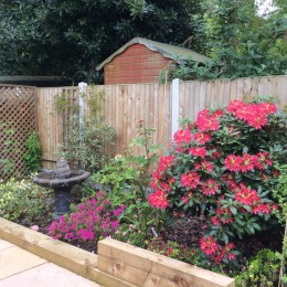 Our Rhododendron and Azalea bed - all bought from Perrywood over many years. Norman & Susan Eastbrook