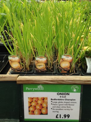Onion 'Bedfordshire Champion' available at Perrywood