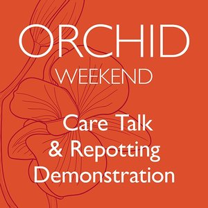 Orchid Weekend at Perrywood