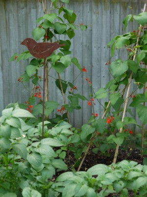 Staked Vegetable Patch