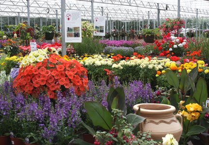 The largest selection of plants in Essex, including Perrywood Grown...