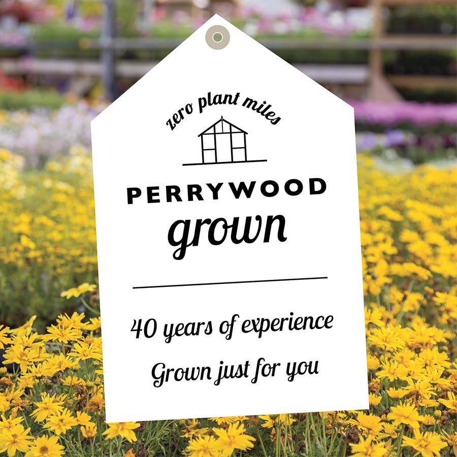 Perrywood Grown