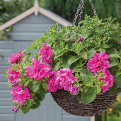 Summer Garden at Perrywood