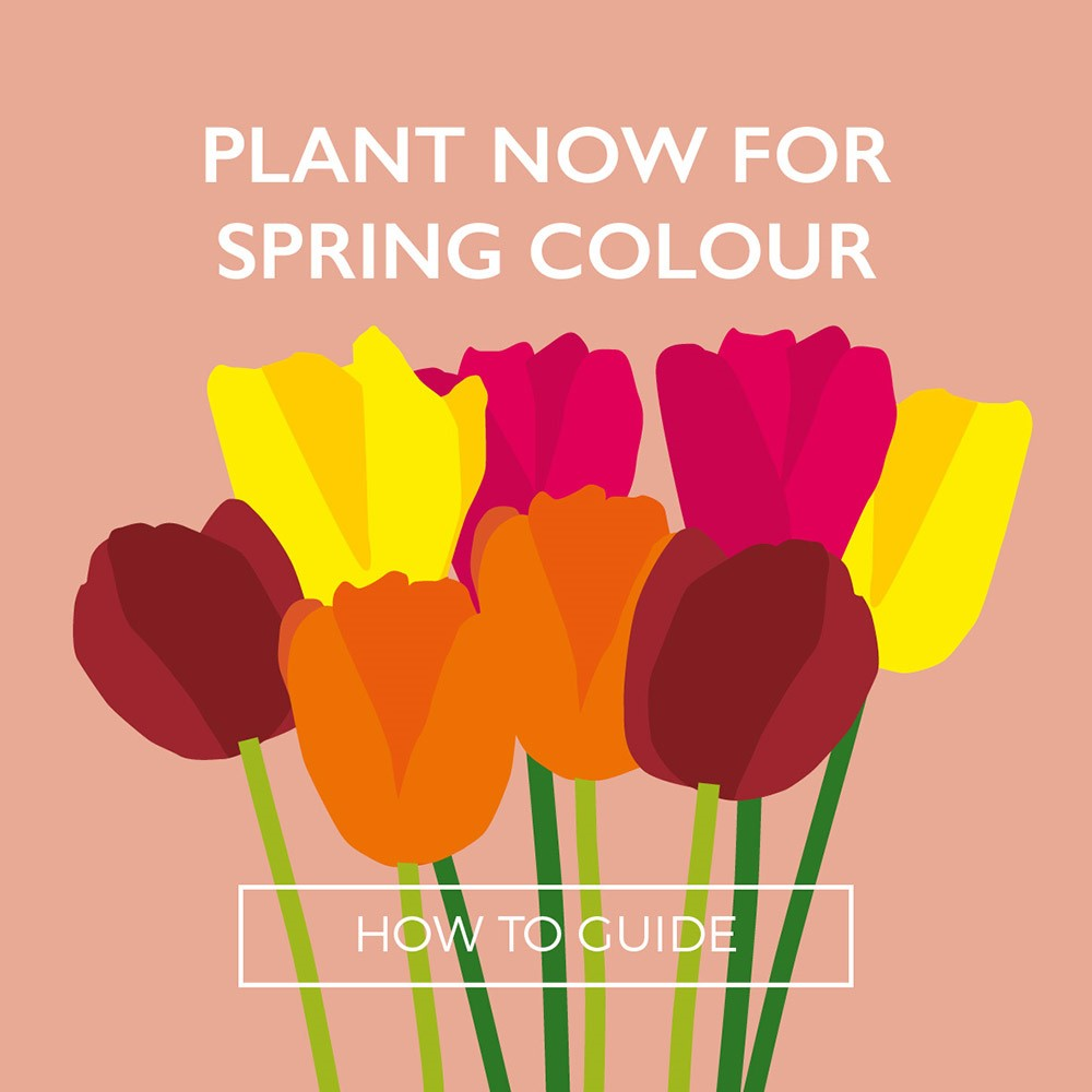 Perrywood-plantnowforspringcolour_2018