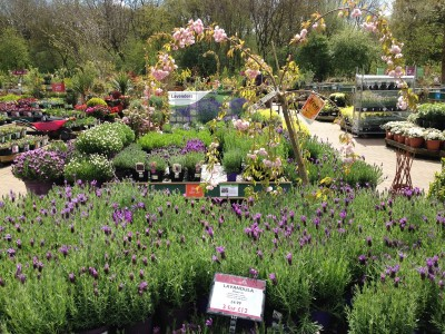 Plant Area at Perrywood Garden Centre