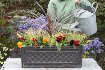 Planting an autumn container demonstrations