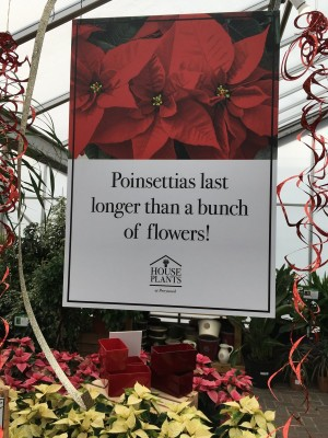 Poinsettias make wonderful gifts