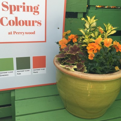 Spring Colour Competition