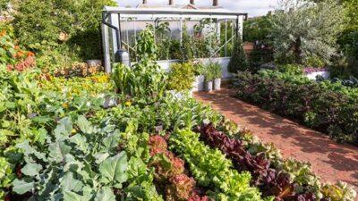 The Chris Evans final Taste Garden at the Chelsea Flower Show