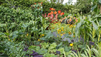 Beautiful herbs, vegetables and edible flowers on display in the Chris Evans' Feel Good Garden at the Chelsea Flower Show