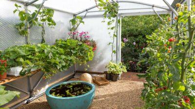 Inside the modern greenhouse part of the Chris Evans Taste Feel Good Garden