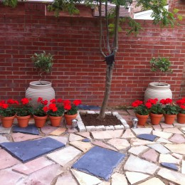 Mediterrean corner on our newly constructed patio. All plants bought from Perrywood naturally :) Tracy Fairman