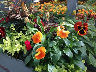 Using the colour wheel in potted containers 2