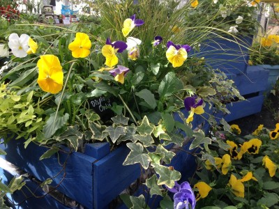 Using the colour wheel in potted containers 3