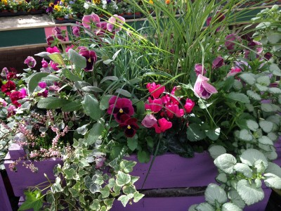 Using the colour wheel in potted containers