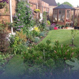 September 2013 the garden was just a lawn. Very pleased with my purchases from Perrywood, now I am having trouble to find space for more planting. Mrs V Wratten