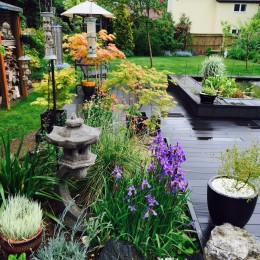 Oriental themed garden in Danbury 24th May 2015. Janet Mulvey