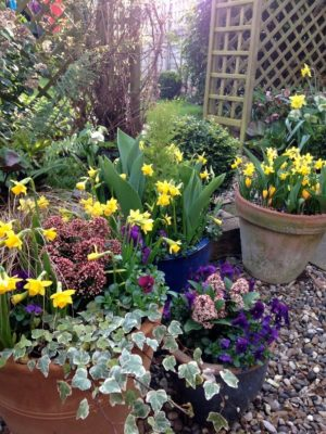 cluster of bulb planting for spring colour