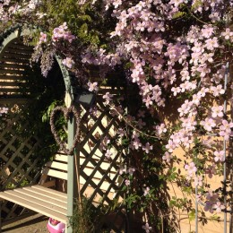 Sunny arbour with clematis and wisteria. Perfect place to sit with my husband in evening with a glass of wine. Gemma Gethen