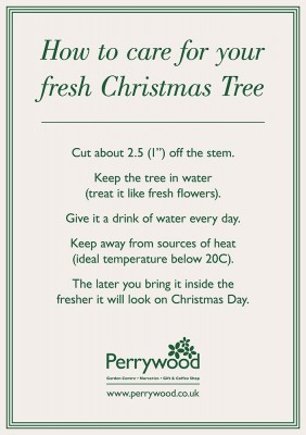 Care advice for your cut Christmas tree